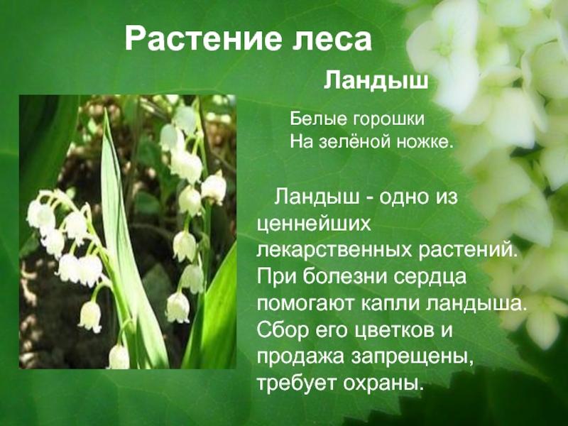 Доклад про растения из красной книги 8950