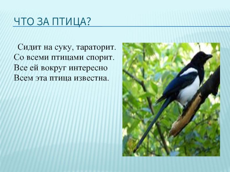 птицы краснодарского края презентация электрокарах