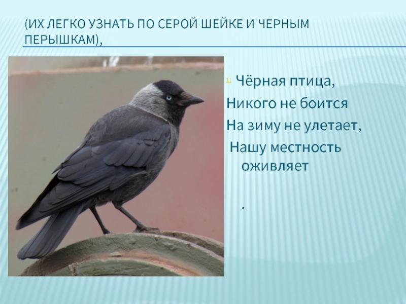 стоит птицы краснодарского края презентация как воплотить это