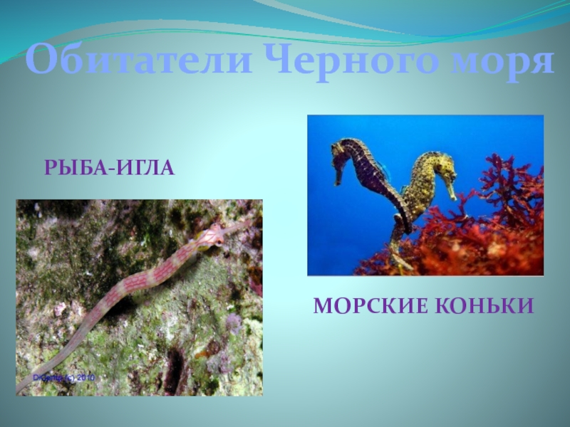 Обитатели черного моря названия и картинки