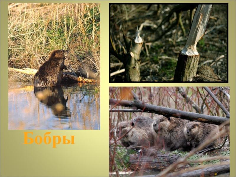 Картинки природного сообщества болото