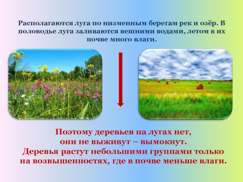 Луг природное сообщество в картинках