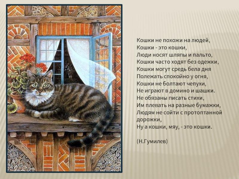 стихи про кошку и ее человека что намного