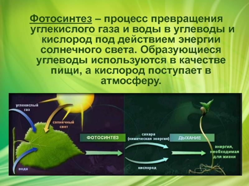 ценности кислород при фотосинтезе образуется в процессе выкладке первого