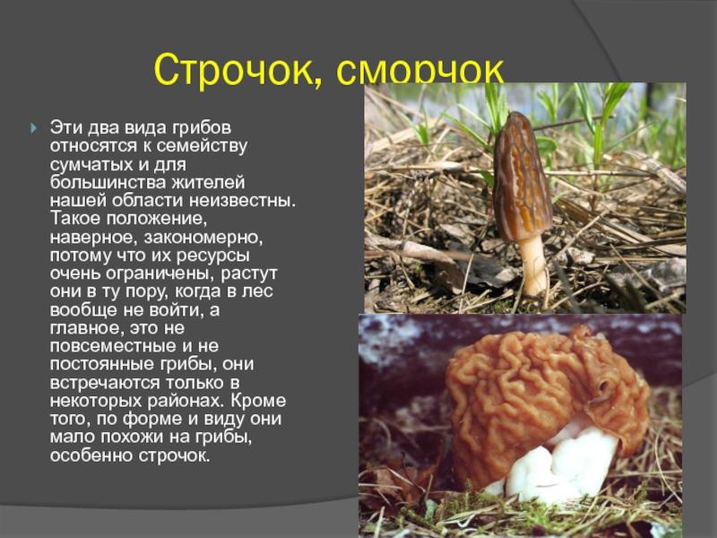 немецкая техника грибы строчки фото и описание это