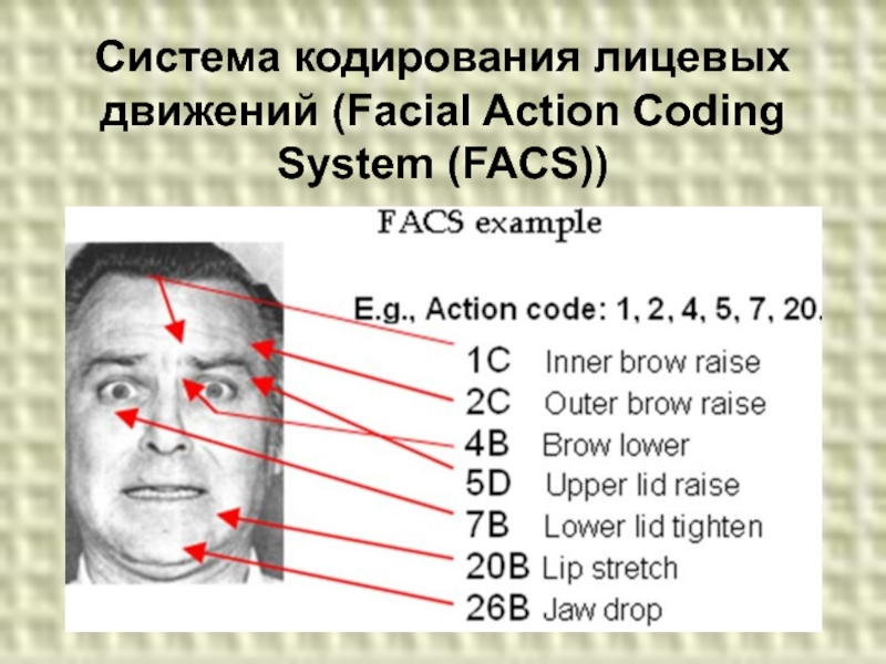 Facial action coding system manual, pic porn gril israil