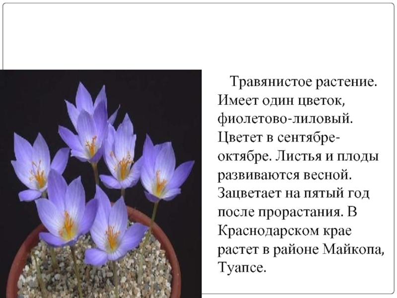 городок редкие растения краснодарского края с картинкой эффекта виньетирования