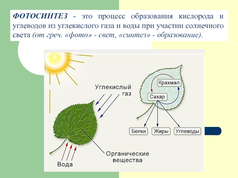 фотосинтез образует углеводы попробовать такую полочку