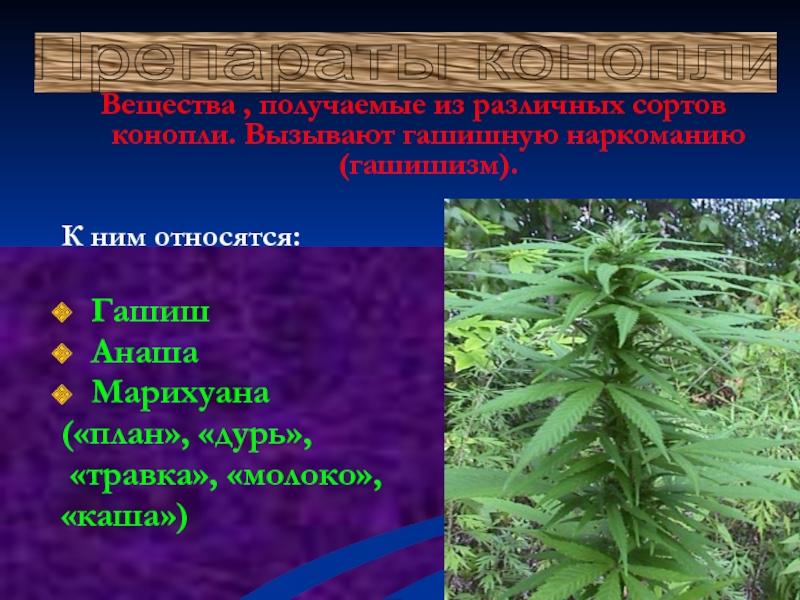 Марихуана вызывает бессонницу сто граммов марихуаны