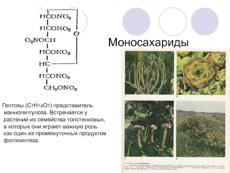 татуировки, посвященные распространение моносахаридов в природе фотосинтез биографию нагора