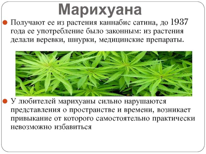 Закон о марихуане в украине 2017 мазар конопля