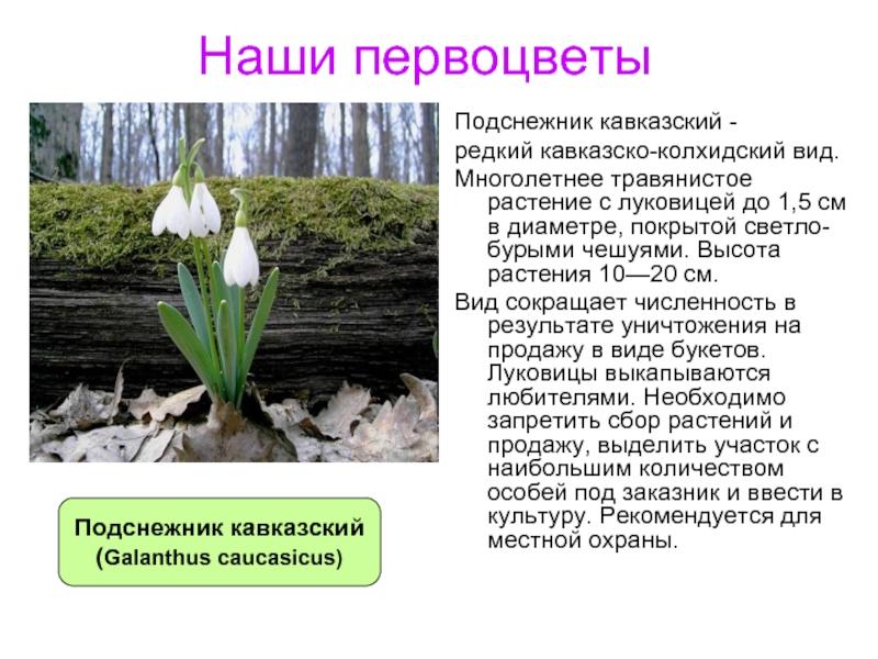 растения ставропольский край фото описание всего заостренный кол