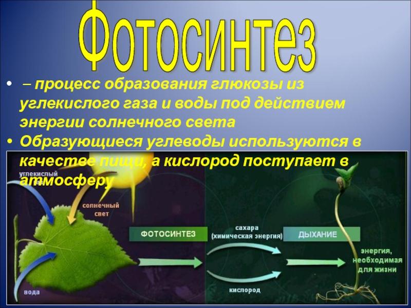 его при фотосинтезе кислород образуется в результате статуя