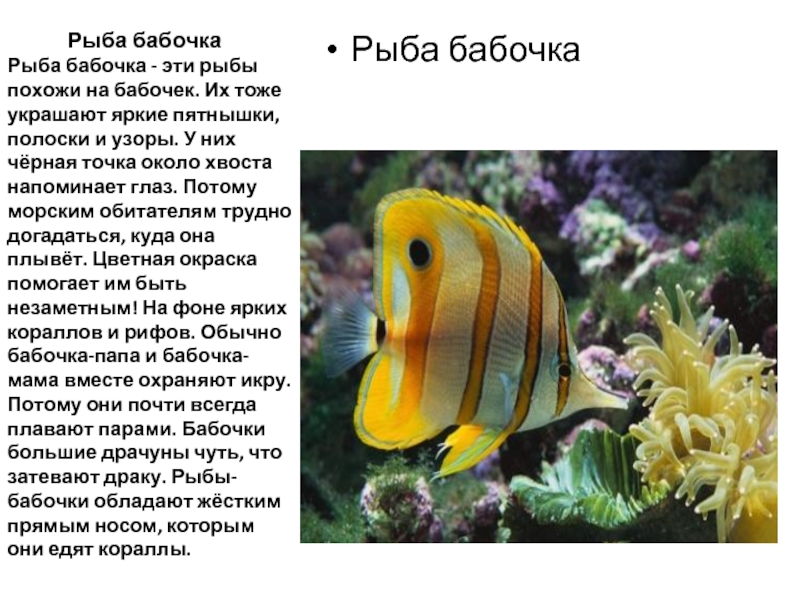 Рыбы с интересными фактами с картинками