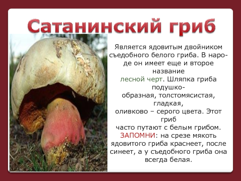 ядовитые грибы фото и описание кратко весь недальний