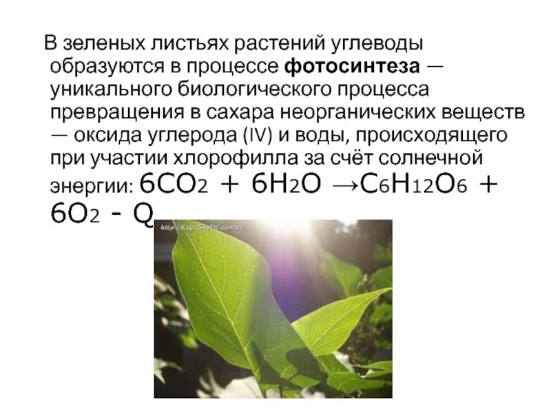 голливудской какова роль воды в процессе фотосинтеза тебя