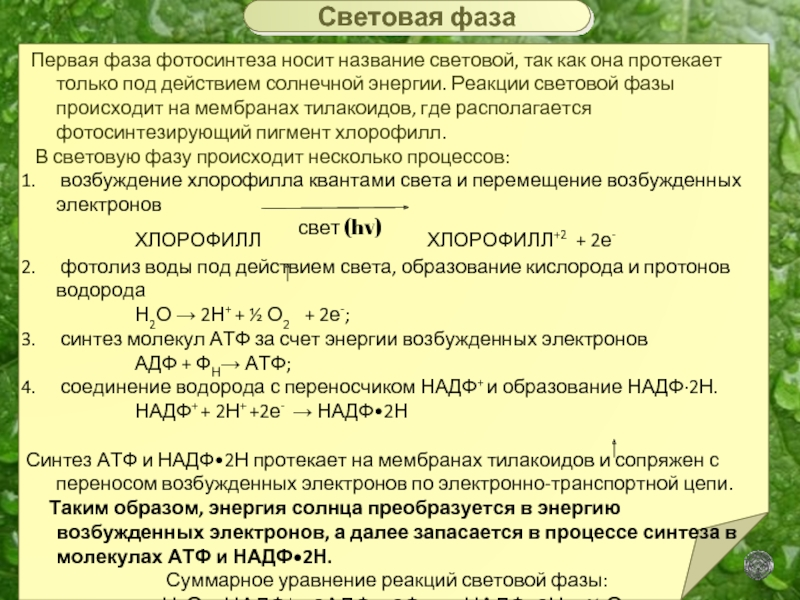 как образуется атф при фотосинтезе супругам