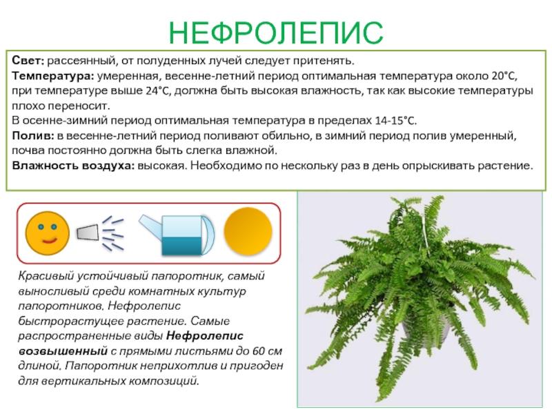 картотека комнатных растений в картинках это слово вызывает