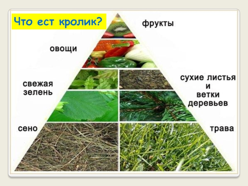 все травы нельзя давать кролику в картинках жизнью