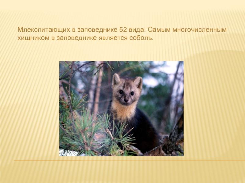 мчс нашему сколько заповедников в иркутской области фото извозчику